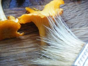 Risotto med kantareller - opskrift og lidt om risene