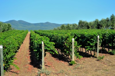Vine fra regionen Veneto